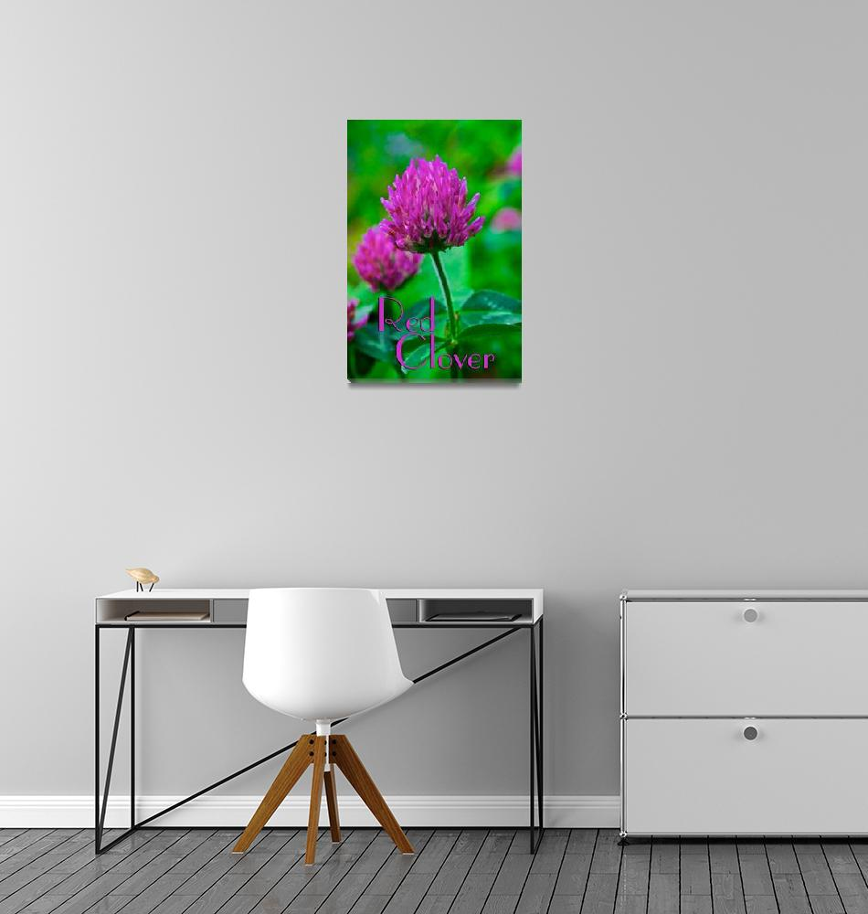 """""""Red Clover""""  (2008) by ParkCast"""