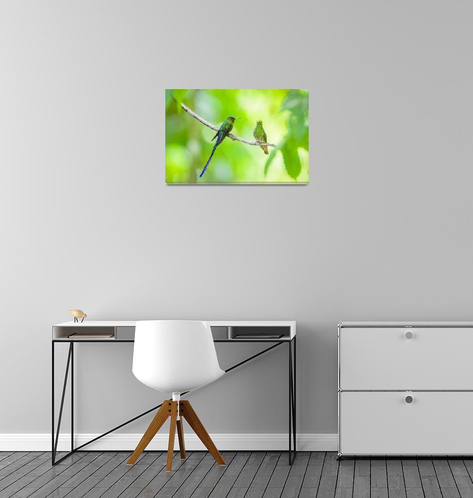 """Violet-Tailed Sylph Hummingbird  BiNTHu-0891""  by PronghornPix"
