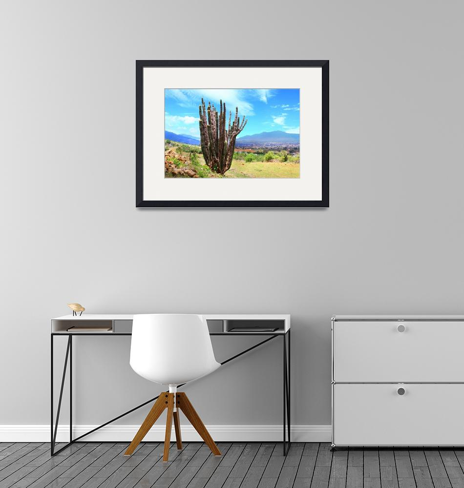 """organ pipe cactus in Tlalixtac with Tlacolula Vall""  (2012) by charker"