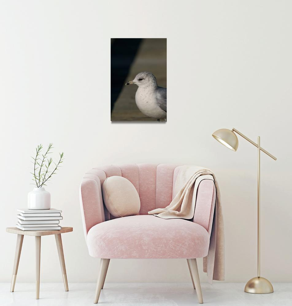 """Ring-Billed Gull Portrait""  (2005) by PaulDRobertson"