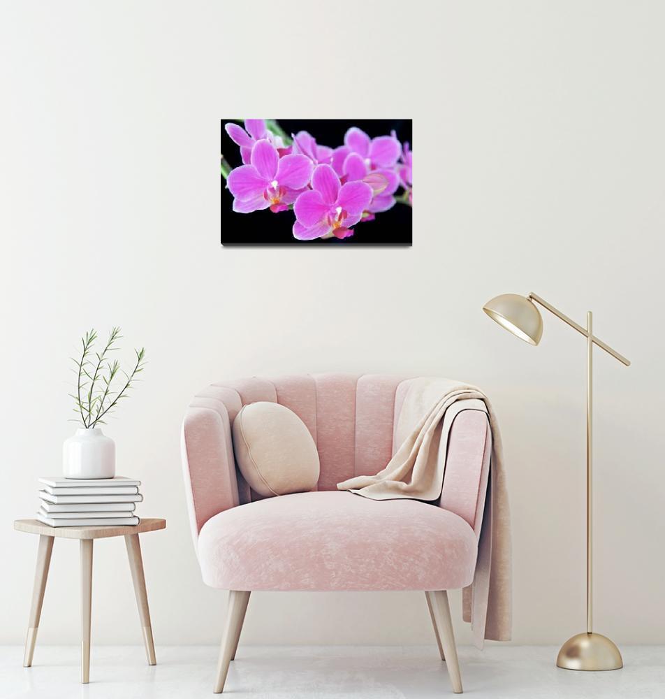 """Orchid Doritaenopsis"