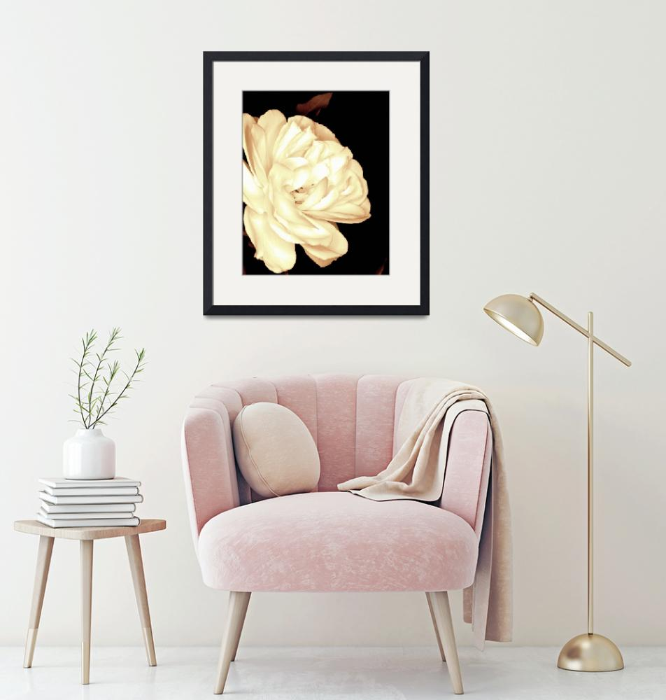 """""""White Rose in a Sepia tone""""  by Linde"""