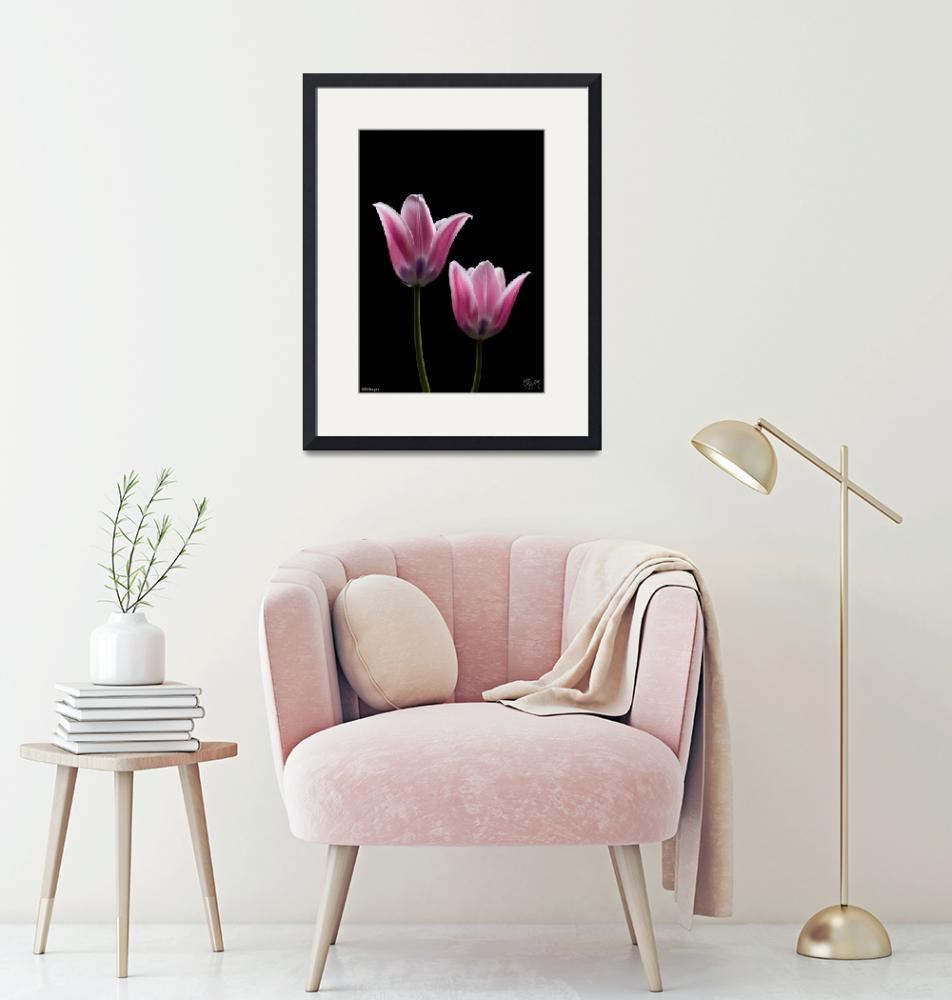 """""""PAIR OF TULIPS""""  (2008) by katbusby"""