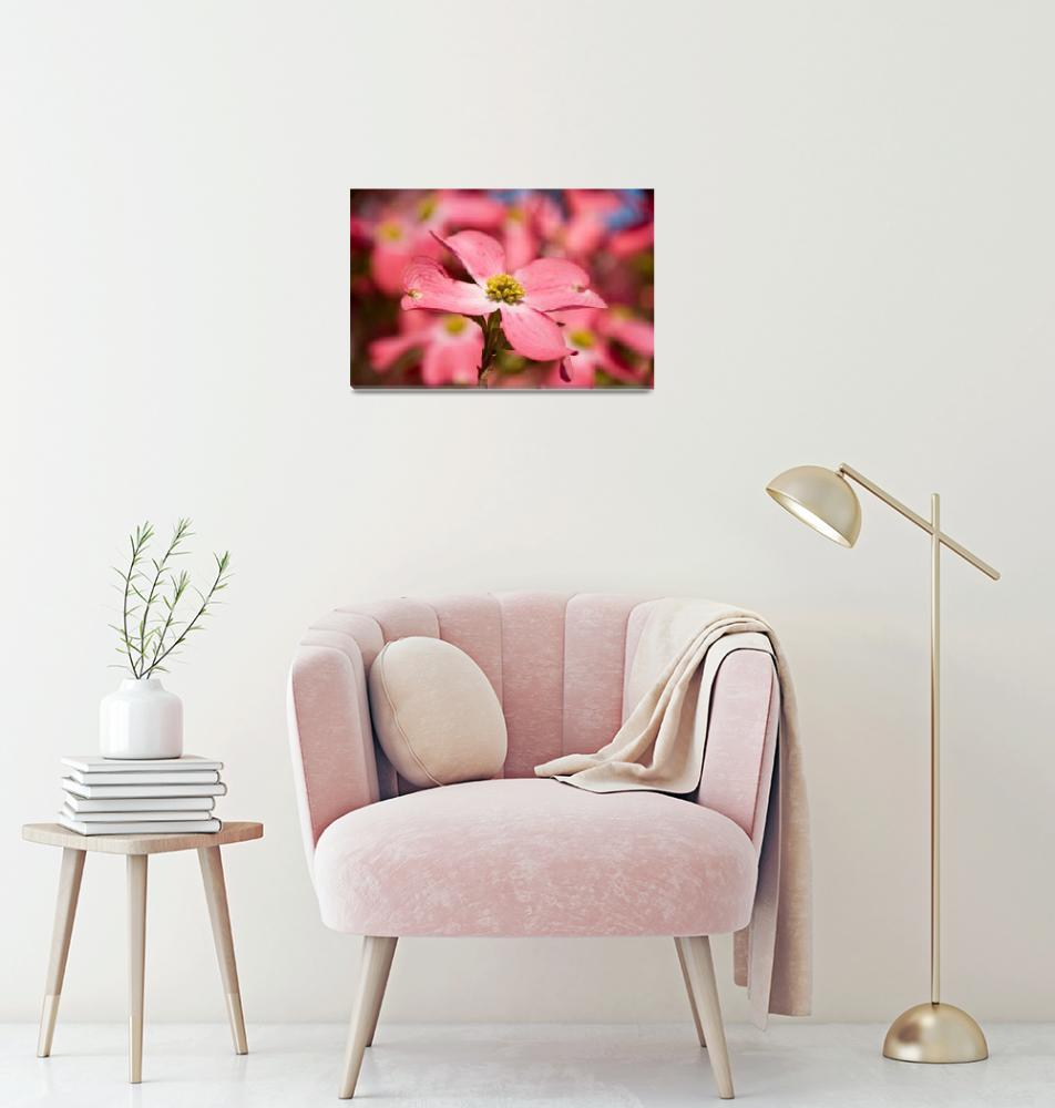 """""""Pink Dogwood""""  (2009) by tricia"""