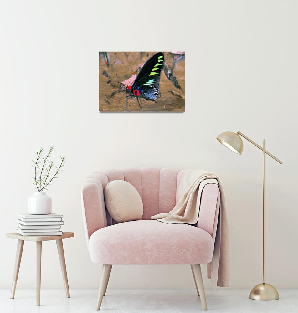 """""""Raja Brooks Butterfly Eating""""  (2015) by JoaoPonces"""
