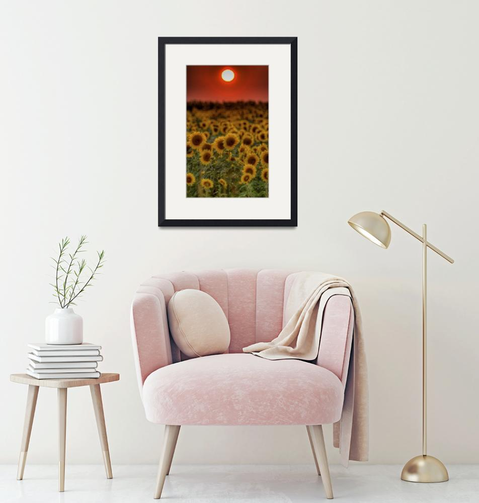 """""""August Sunset and Sunflowers""""  (2009) by jimcrotty"""