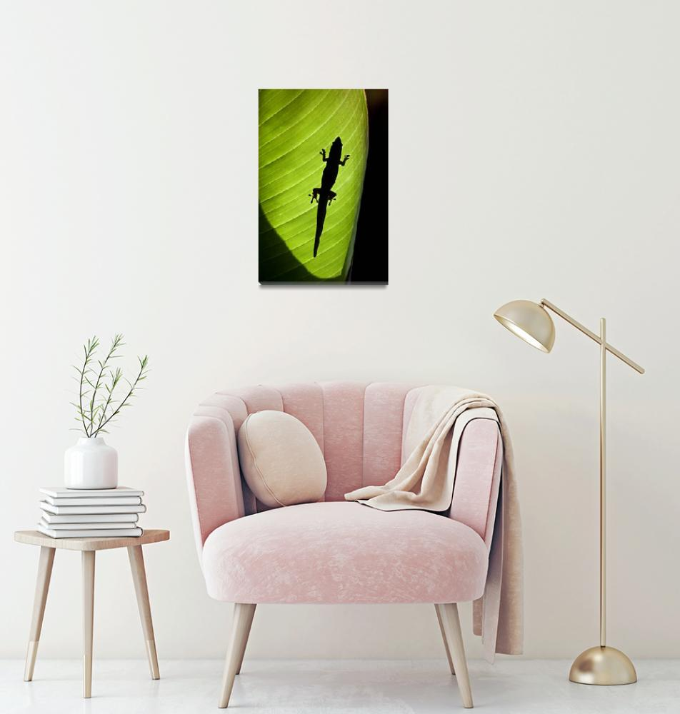 """""""Gold Dust Day Gecko Silhouetted Through Sunlit Gin""""  by DesignPics"""