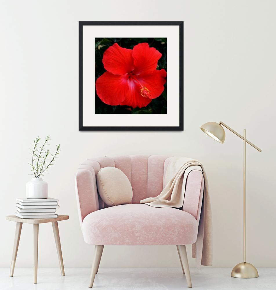"""""""Hibiscus""""  by KHarrison"""