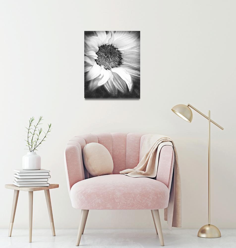 """Sunflower White And Black""  by RubinoFineArt"