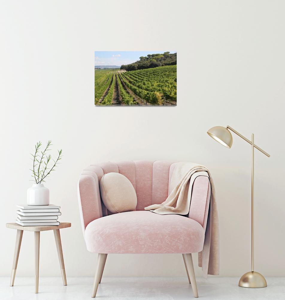 """Spanish Vineyard""  (2014) by Groecar"
