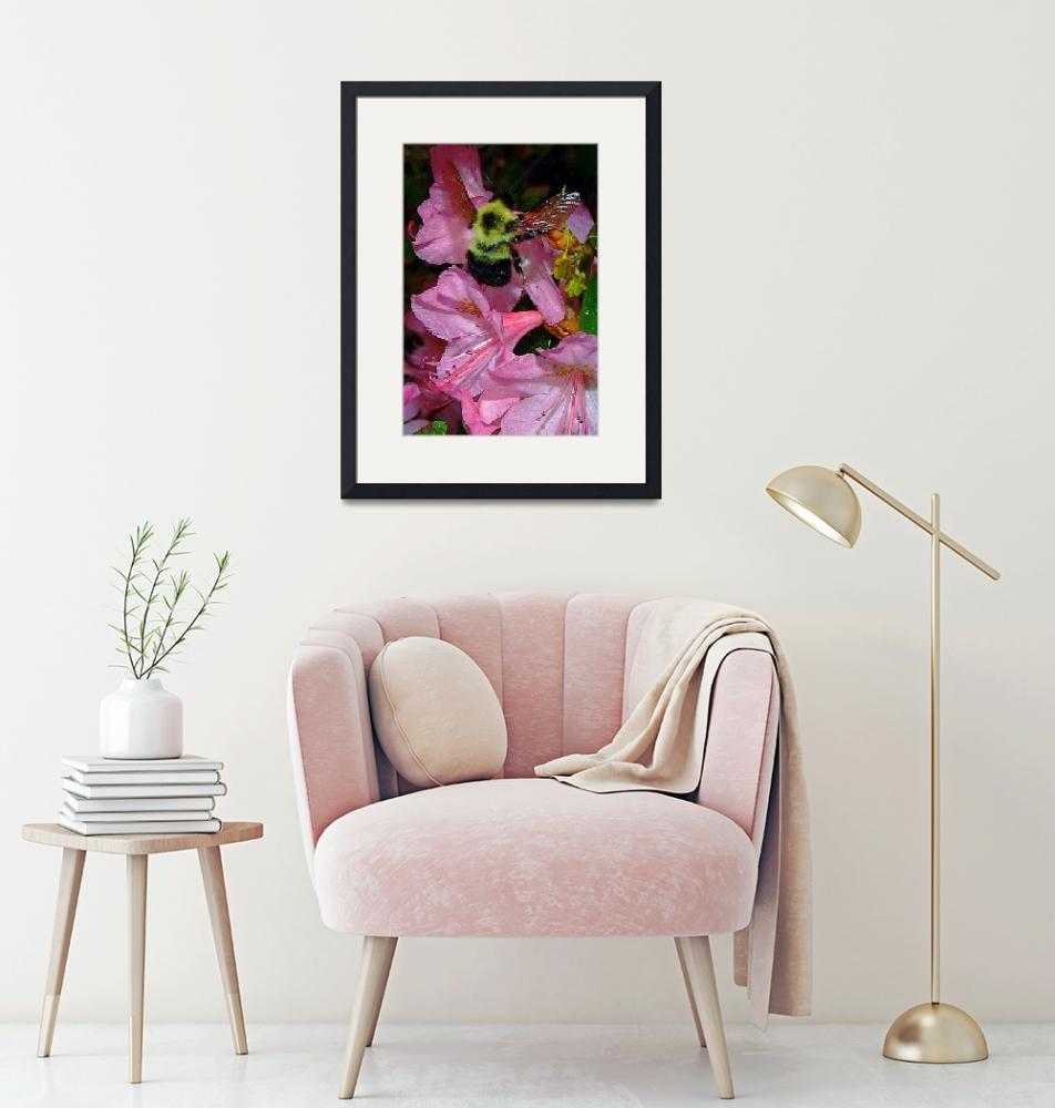 """""""Pink Rhododendron with Bee""""  (2009) by bavosiphotoart"""