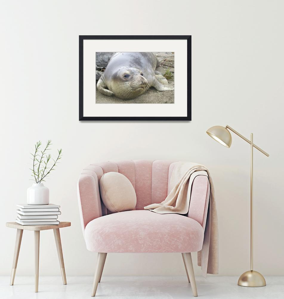 """Elephant Seal thoughts""  by eyalna"