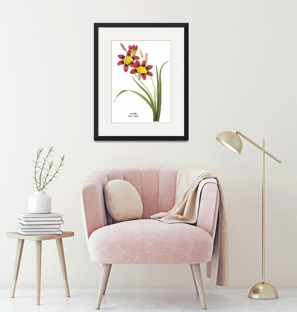 """""""Corn Lily (Ixia Tricolor) Botanical Art""""  by ArtLoversOnline"""