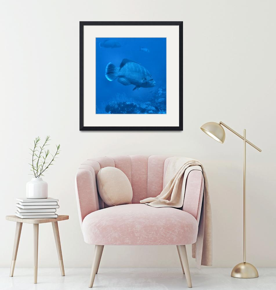 """""""Napolean Wrasse""""  by Mac"""