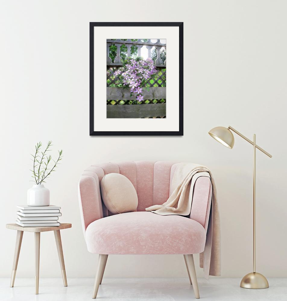 """""""Purple Clematis Flower Vine Soaking up Sun Rays""""  by Chantal"""