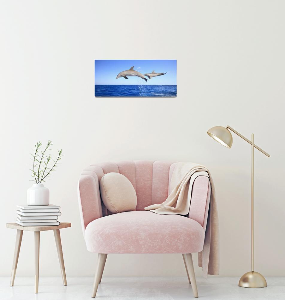"""Roatan, Bay Islands, Honduras Bottlenose Dolphins""  by DesignPics"