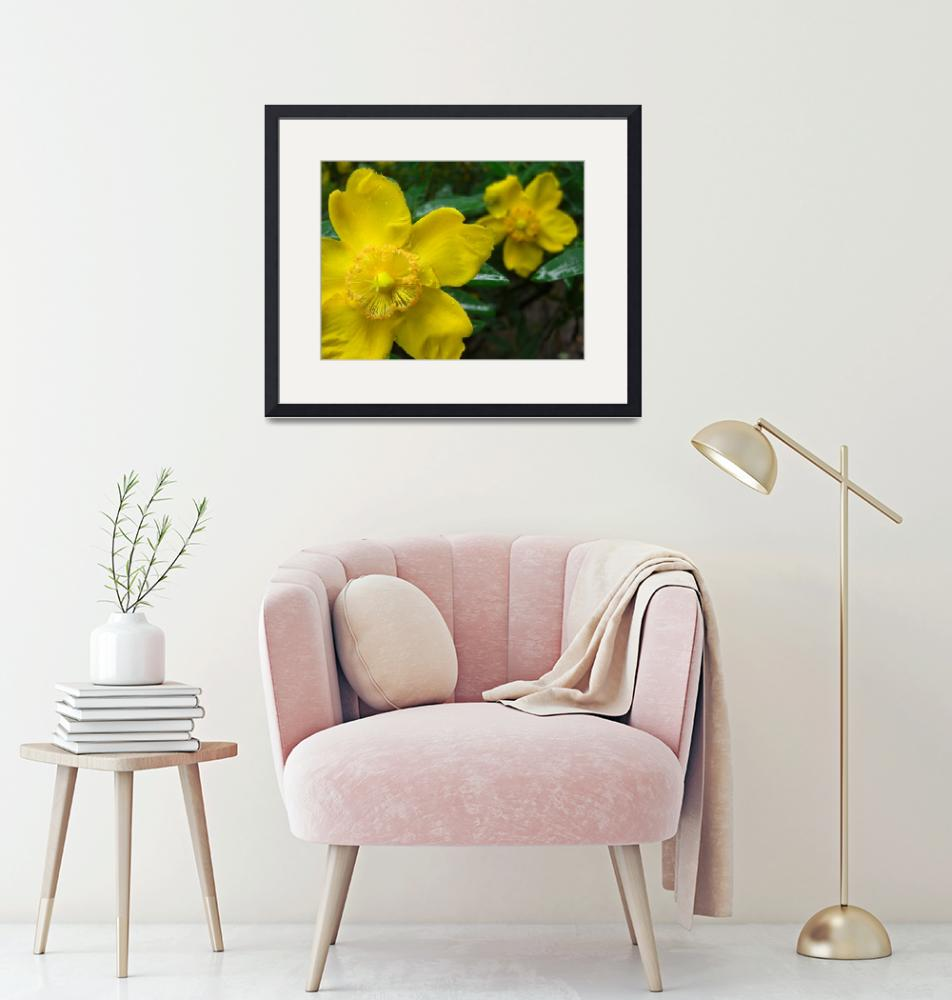 """""""Yellow flowers in the rain""""  by Beth_arts"""