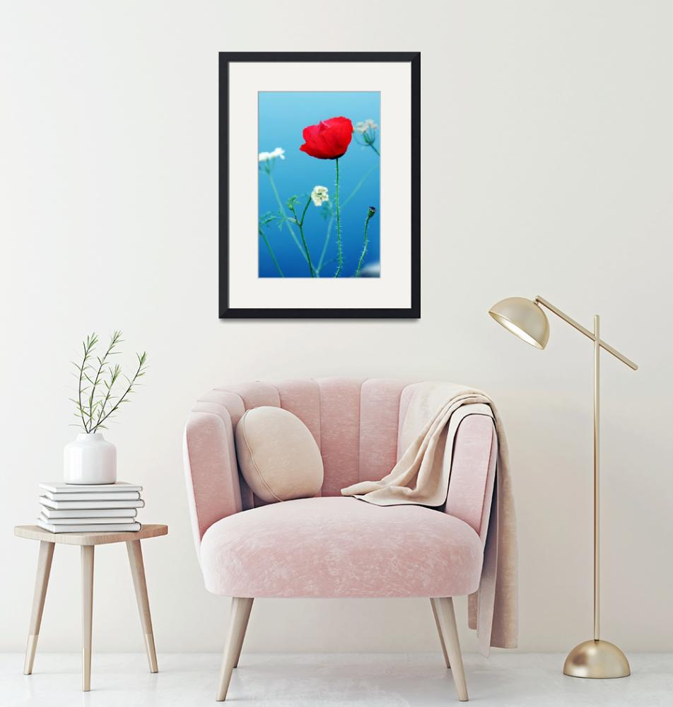 """""""Red poppy""""  by cristal"""