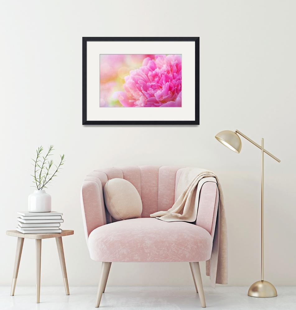 """""""Peony with Canvas Effect""""  (2014) by joanhan"""