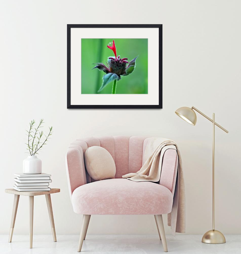 """""""Bee Balm""""  (2011) by LJdesigns"""