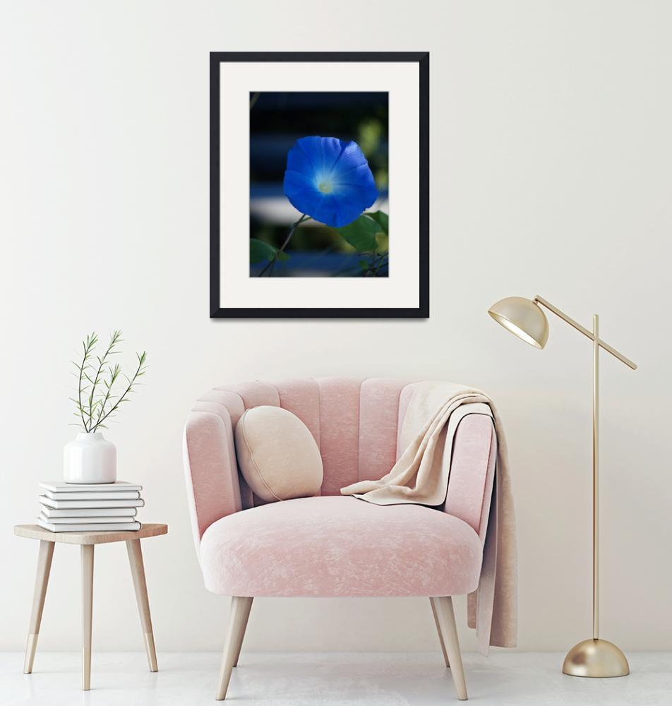 """""""Stunning Glowing Morning Glory""""  (2010) by MikeMBurkeDesigns"""