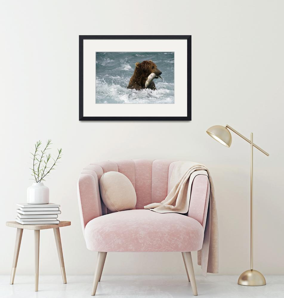 """""""Grizzly Fishing for Chum in McNeil River Alaska""""  by DesignPics"""