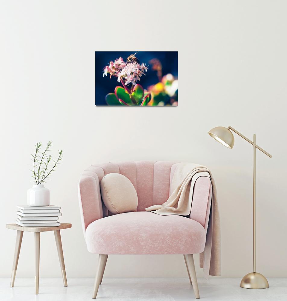 """Crassula Ovata Flowers And Honey Bee""  (2017) by sharonmau"
