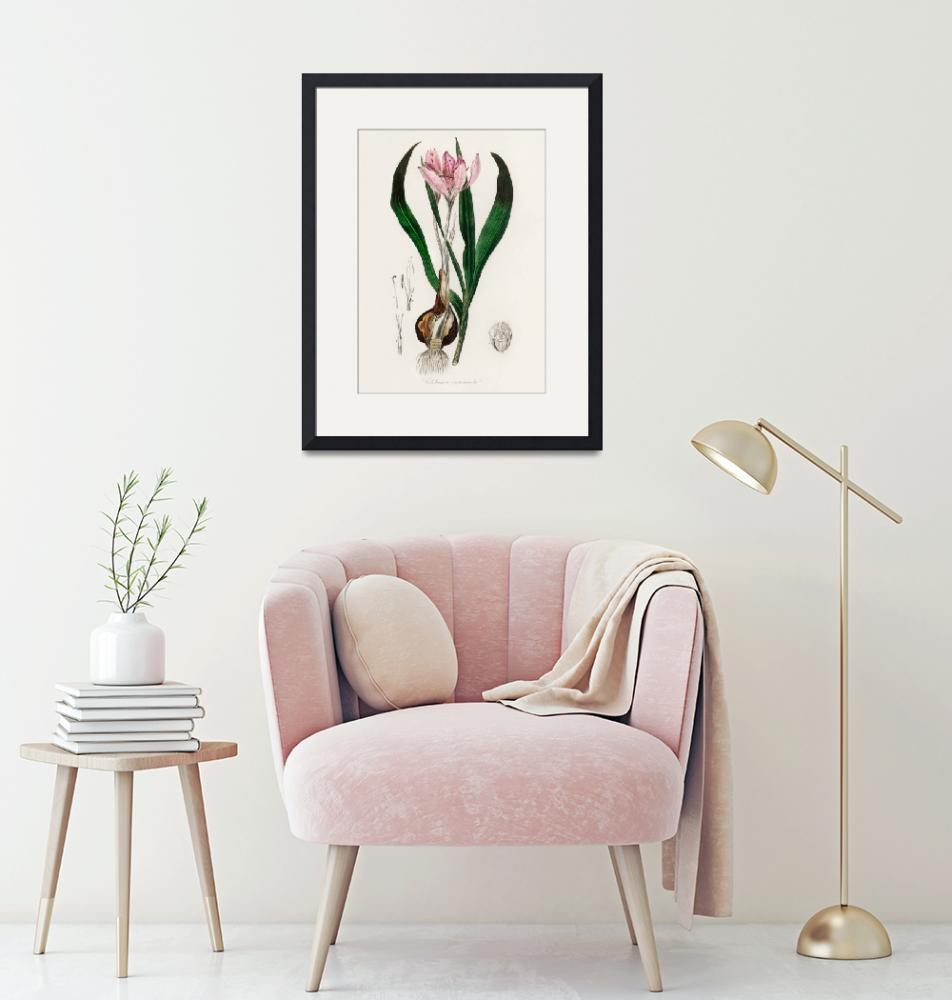 """Vintage Botanical Autumn crocus""  by FineArtClassics"