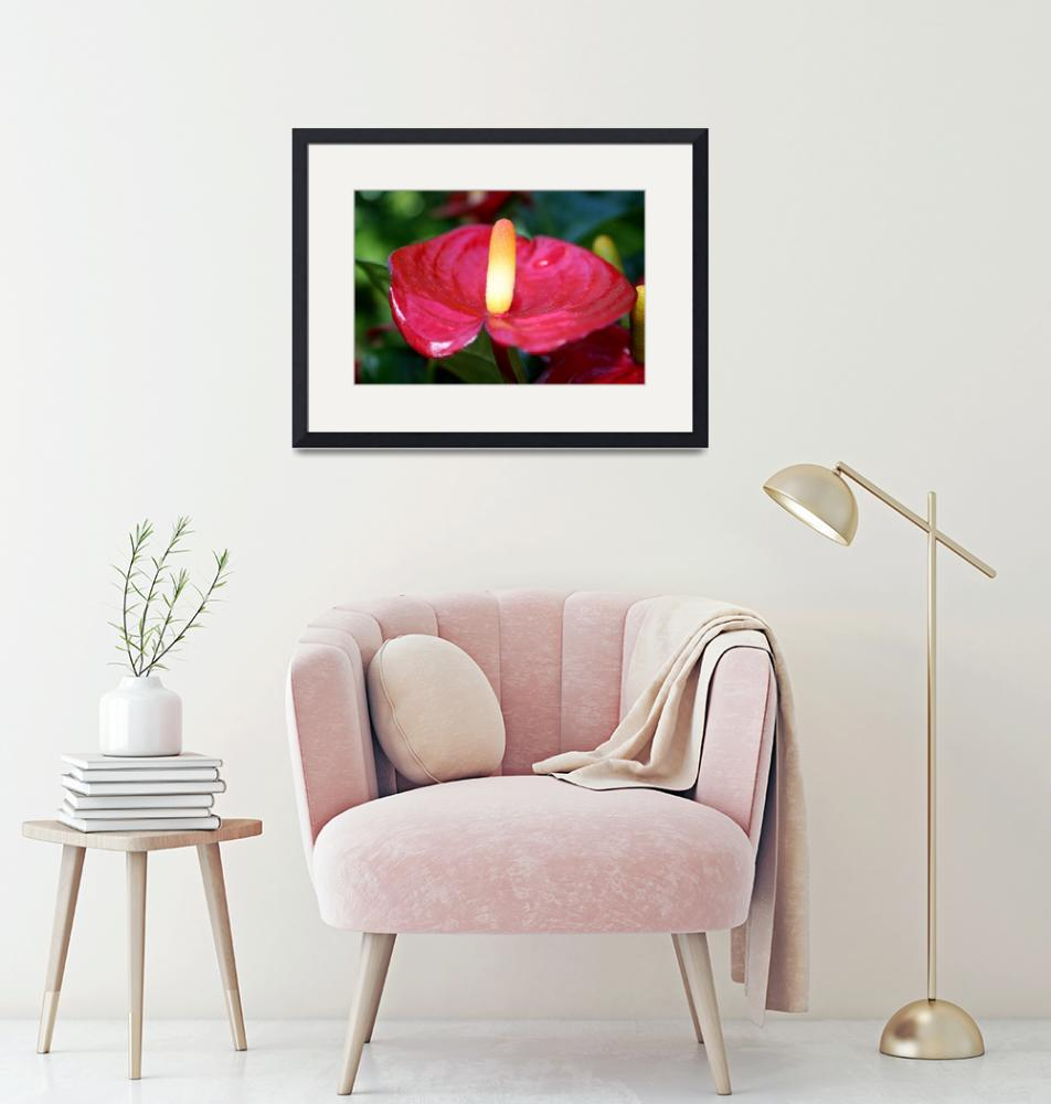 """""""Red Anthurium""""  (2011) by TheUrbanMethod"""