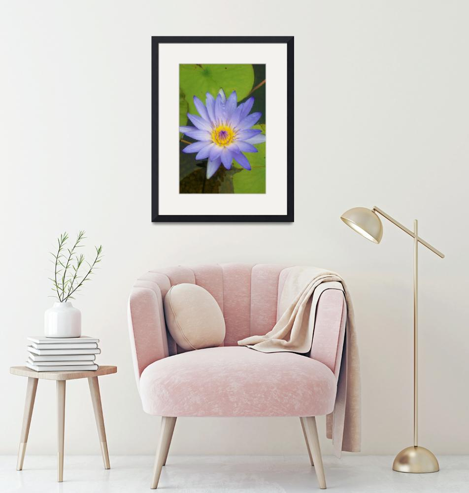 """purple water lily""  (2007) by mandlesgirl"