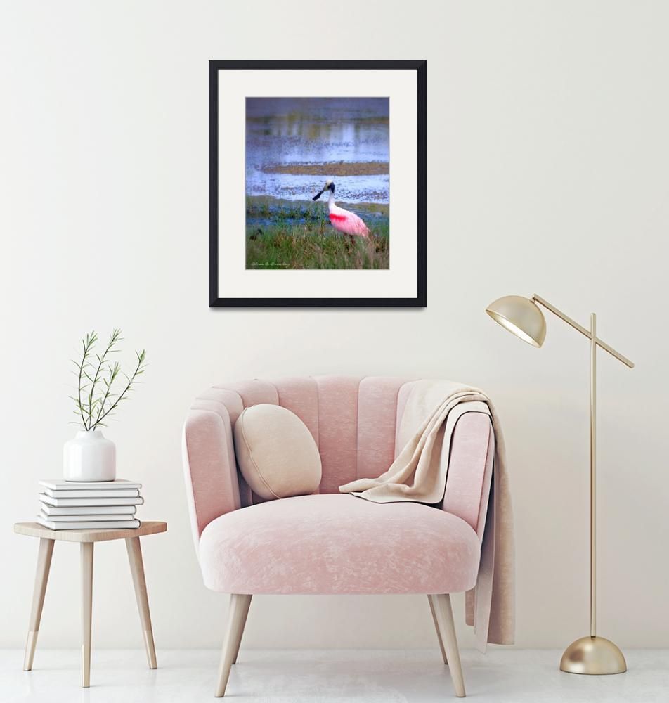 """""""Roseate Spoonbill in the Wild""""  (2010) by ChrisCrowley"""