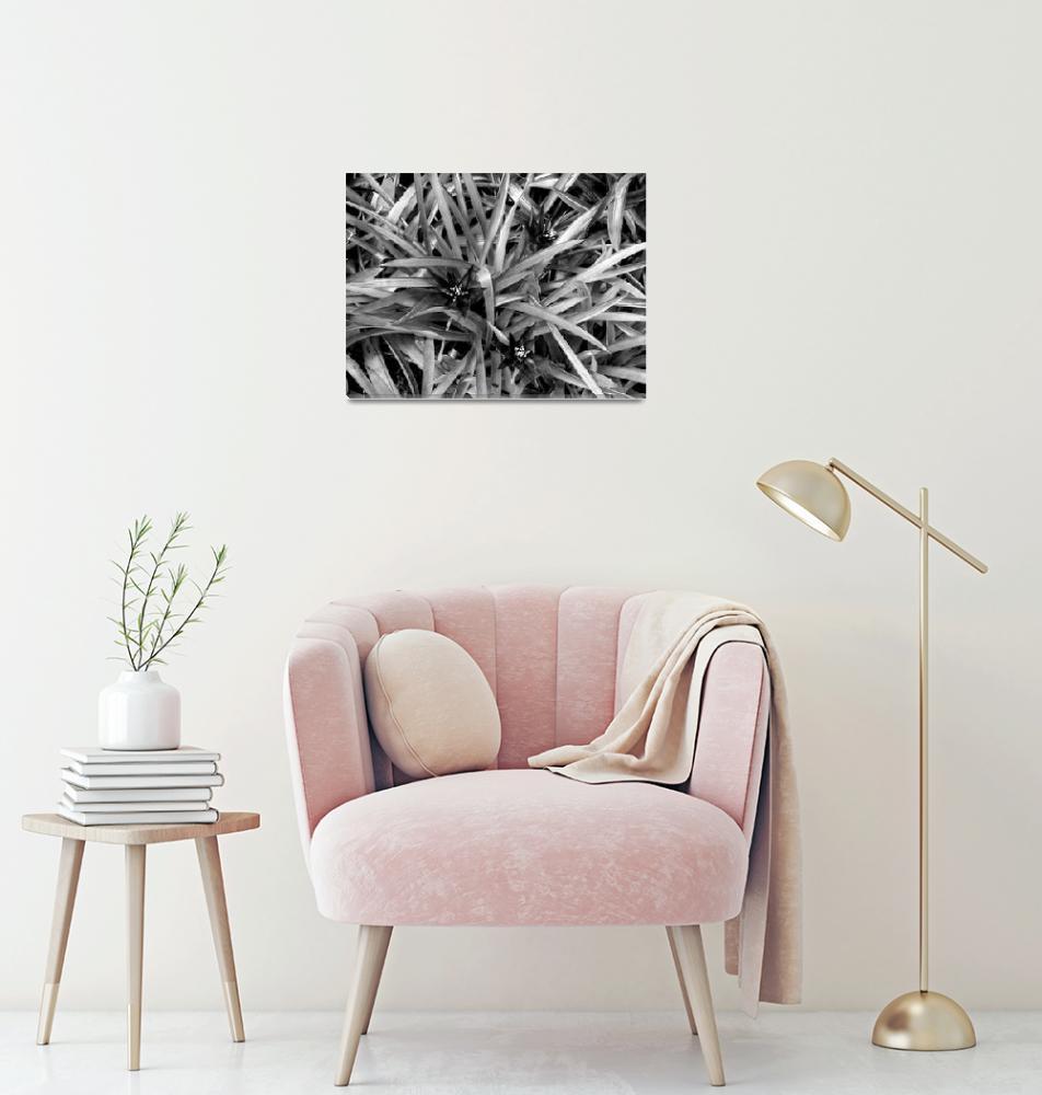 """Bromeliads""  (2010) by impressionistheart"