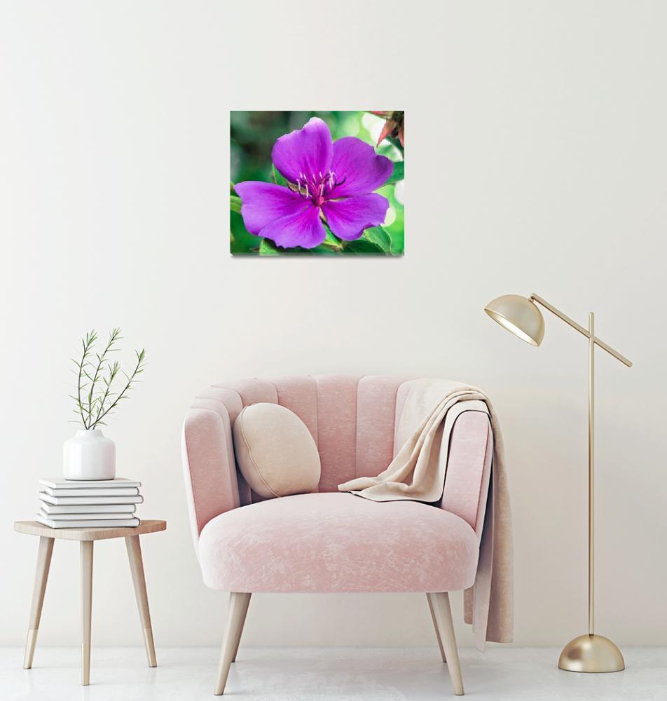 """""""Royal Purple Glory""""  (2013) by mjphoto-graphics"""