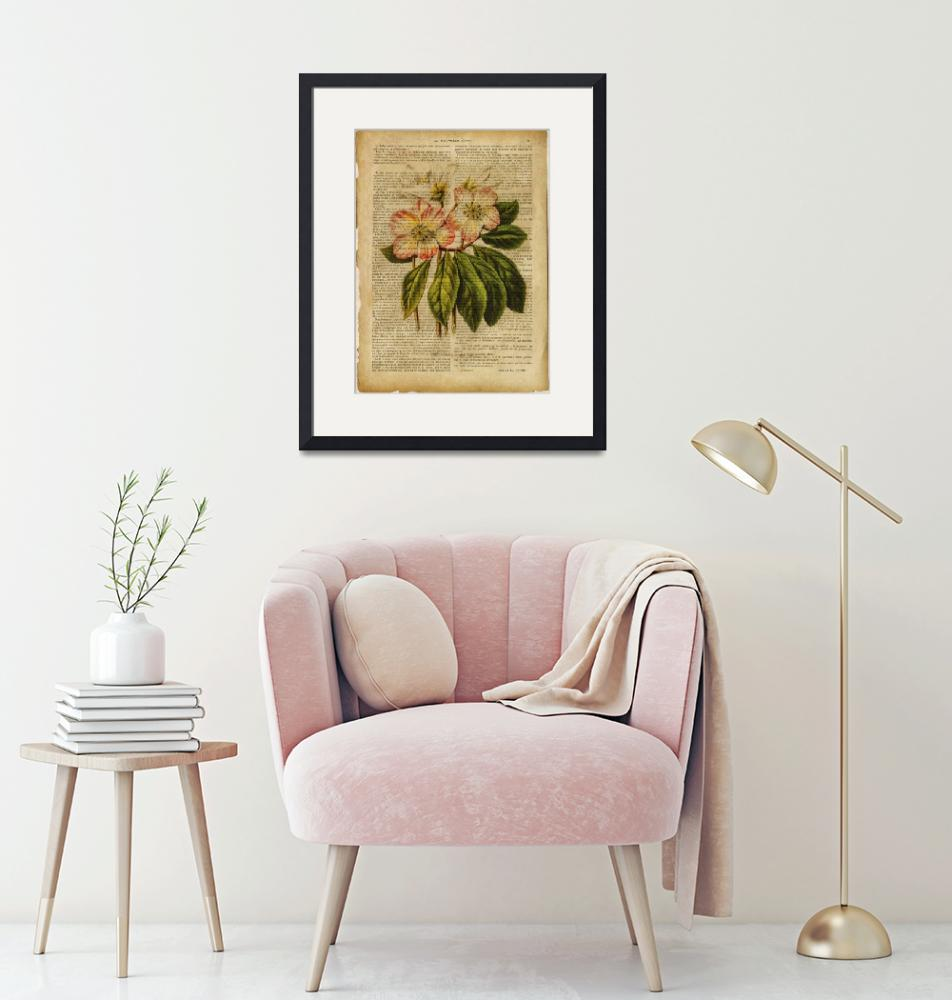 """dog rose vintage print""  by Art_by_Lilia"