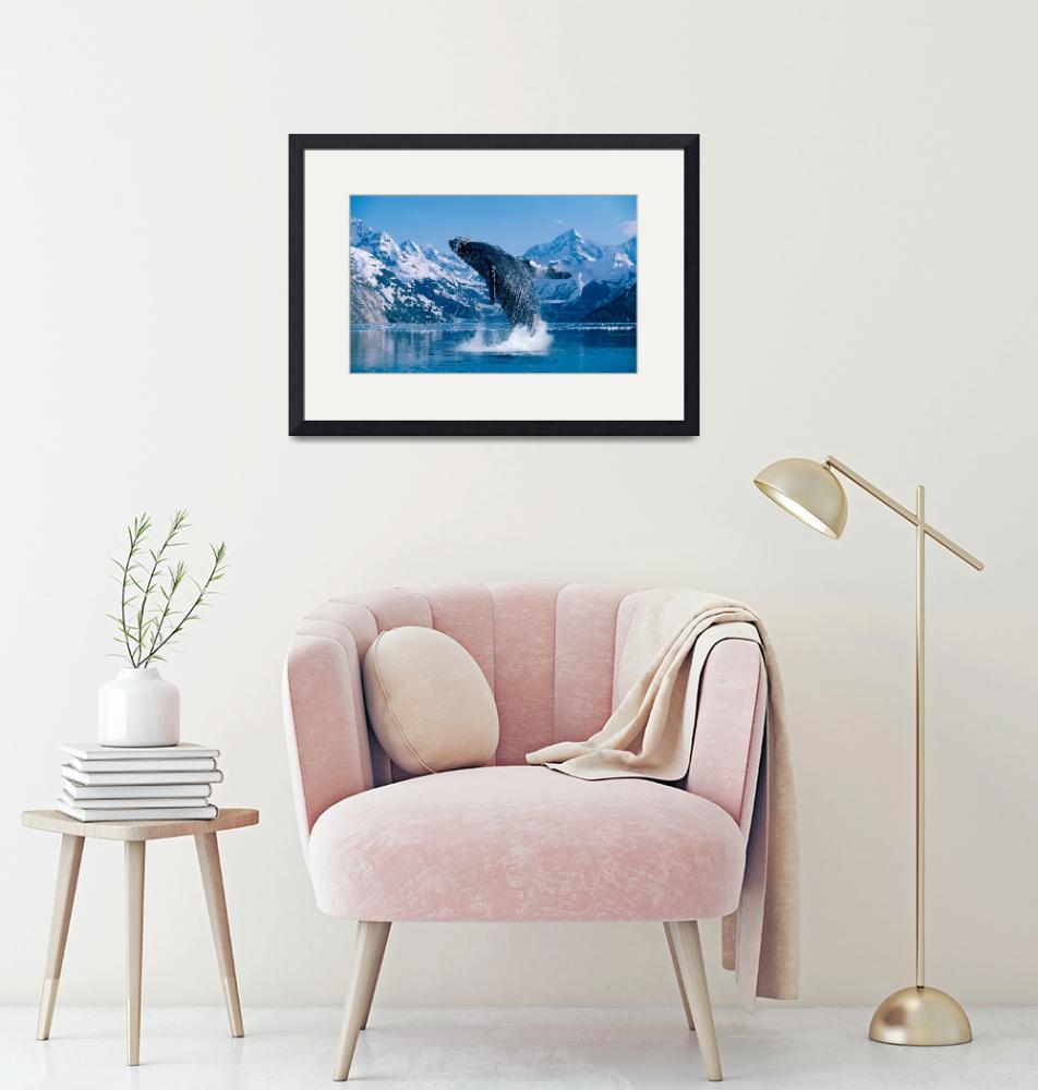 """Humpback Whale Breaching Snowcapped Mountains""  by DesignPics"
