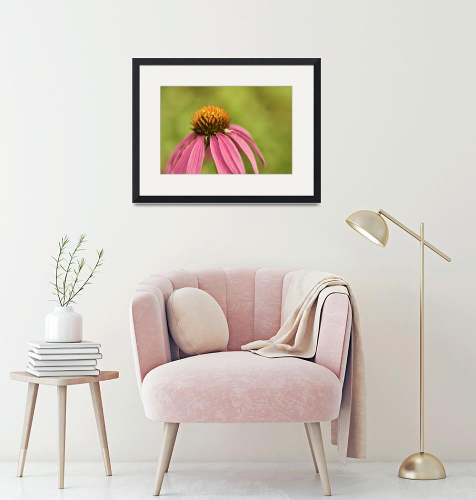 """""""Coneflower and Crab Spider"""" (2016) by MotherNature1"""