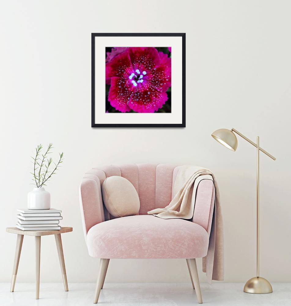 """""""Ruby Red Sweet William Square""""  (2016) by KsWorldArt"""