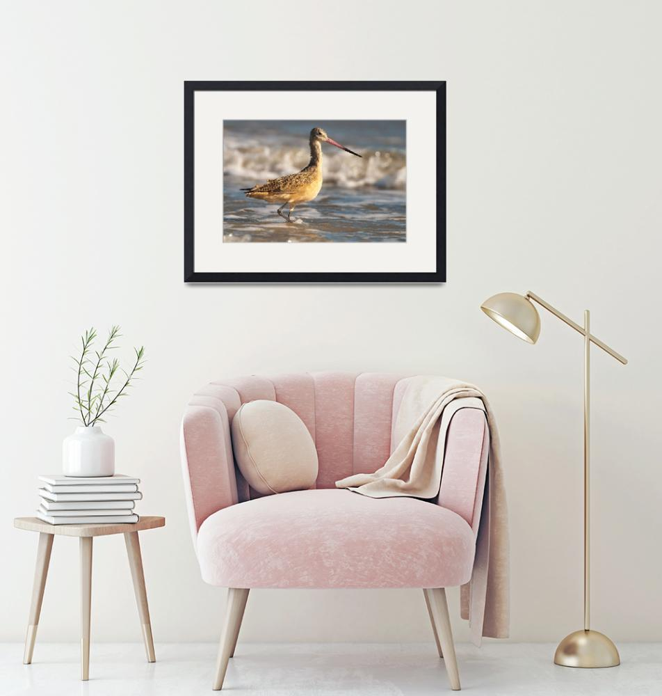 """""""Marbled Godwit at The Beach"""" (2012) by NatureAsArt"""