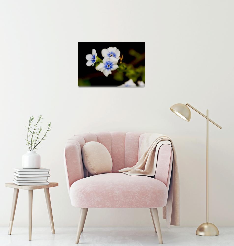 """White and Blue flower""  (2009) by pradyshotit"