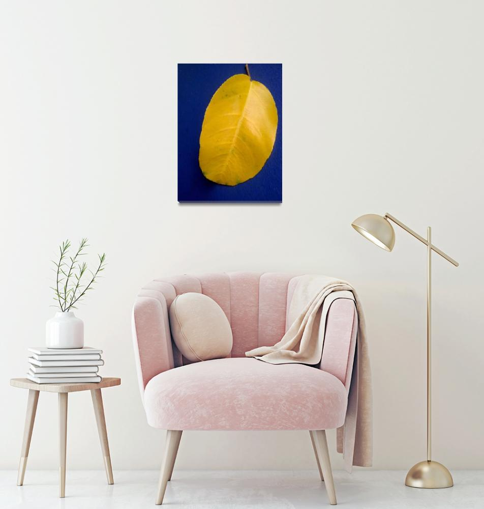 """yellow leaf on blue bench""  by ArcherKelly"