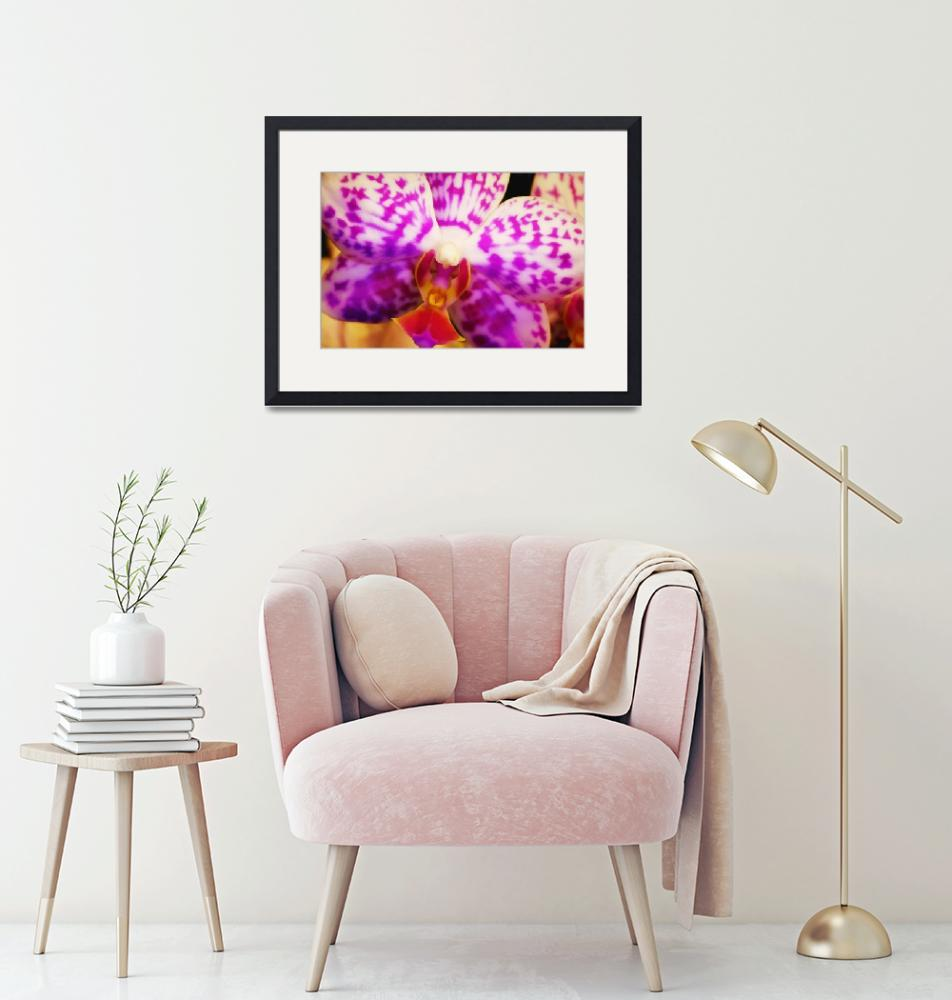 """""""Bold Orchid""""  (2017) by SoulfulPhotos"""