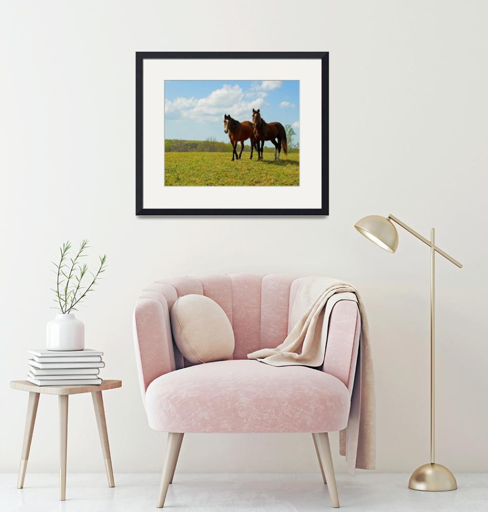 """""""Country Horses""""  by tricia"""