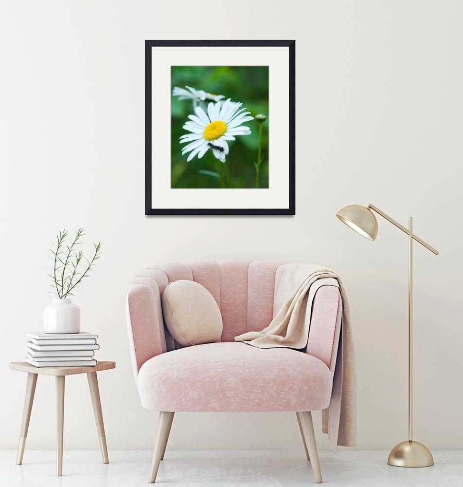 """""""Daisy with caterpillar""""  by Trailheads"""