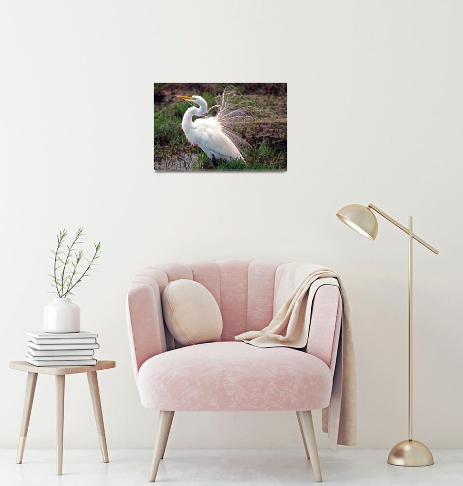 """""""Great Egret (Ardea alba)""""  (2011) by shelshots"""