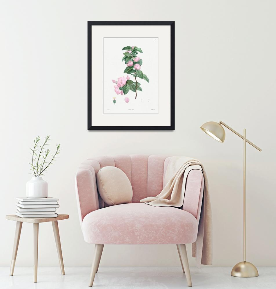"""Pale Pink Flower Vintage Botanical""  by FineArtClassics"