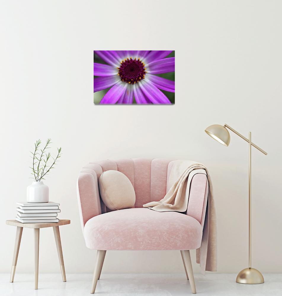 """Purple Cineraria Flower Close-up 2016""  (2016) by KsWorldArt"