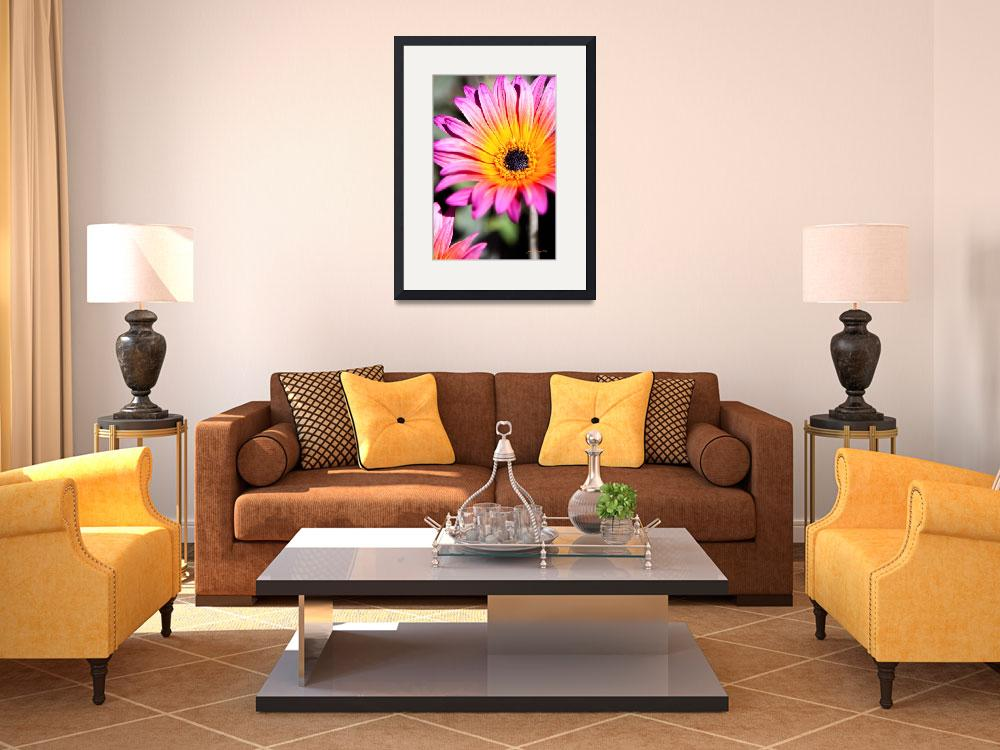 """""""Pink and Gold Daisy&quot  (2011) by johncorney"""