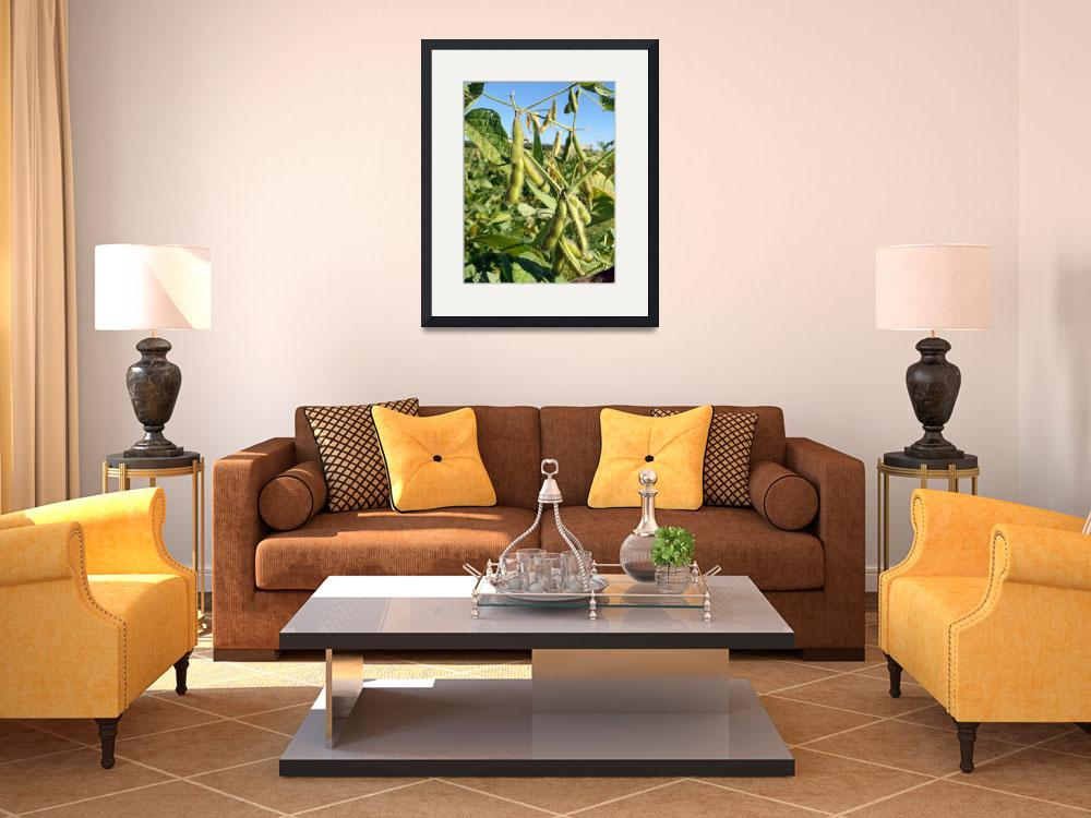 """""""Soybeans in Autumn&quot  (2012) by robertmeyerslussier"""