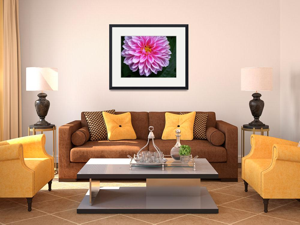 """Pink Dahlia in Full Bloom""  (2009) by kalabart"