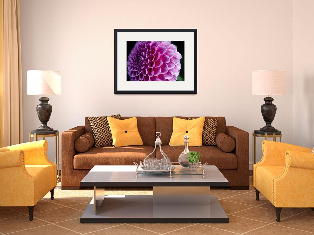 """""""Dahlia Print: """"Pretty In Pink""""&quot  (2012) by SoulfulPhotos"""